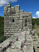 petite muraille cyclamens